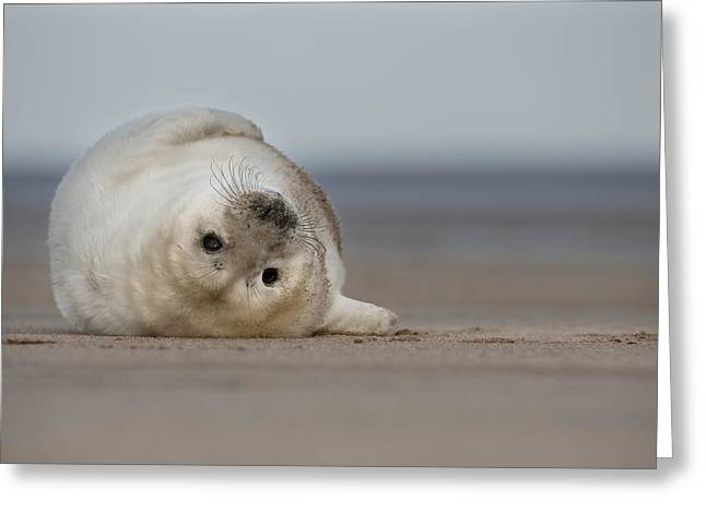 Ocean Mammals Greeting Cards - Lifes A Beach Greeting Card by Andy Astbury
