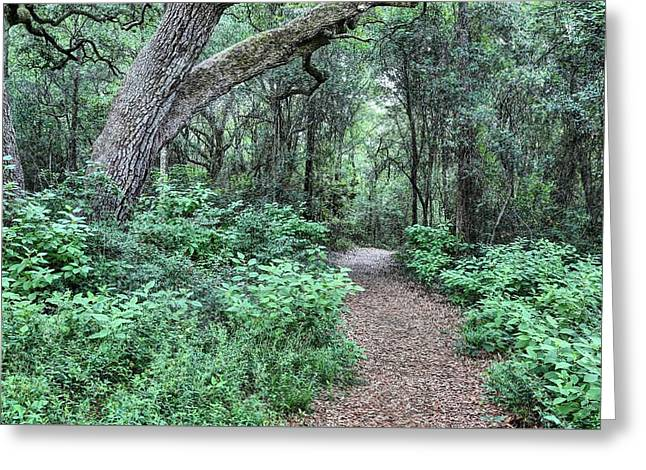 Jogging Greeting Cards - Lifes Pathways Greeting Card by JC Findley