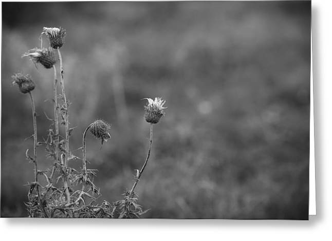White Photographs Greeting Cards - Lift Me Up Greeting Card by Chris Daugherty
