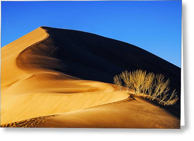 Light And Shadow At Bruneau Dunes State Park In Idaho Greeting Card by Vishwanath Bhat