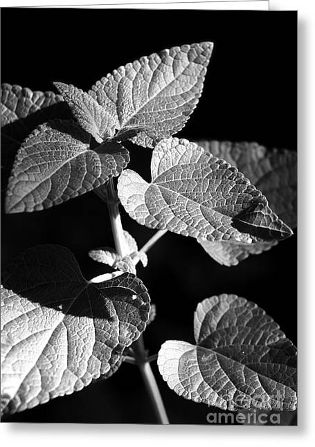 Jeannie Burleson Greeting Cards - Light and Shadow Greeting Card by Jeannie Burleson
