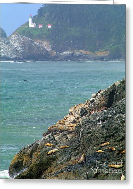 Sea Lions Greeting Cards - Light House And Sea Lions Greeting Card by Nick Gustafson