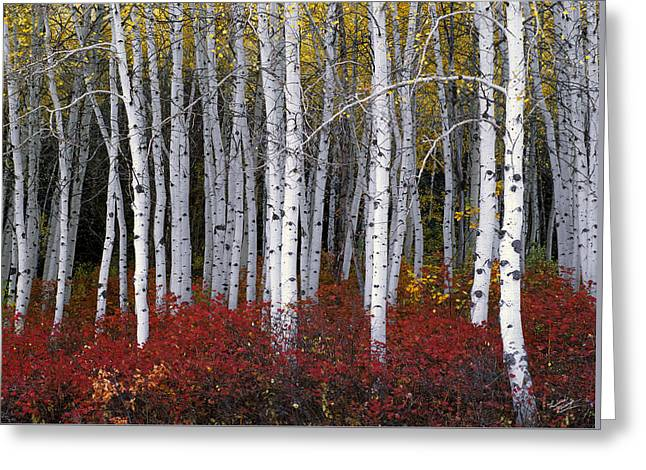 Light In Forest Greeting Card by Leland D Howard
