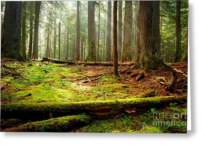 Light In The Forest Greeting Card by Idaho Scenic Images Linda Lantzy