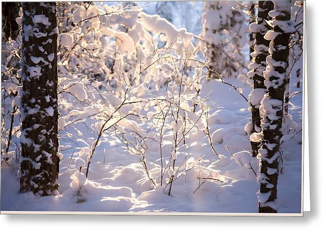 Light Of Winter Greeting Card by Rose-Maries Pictures