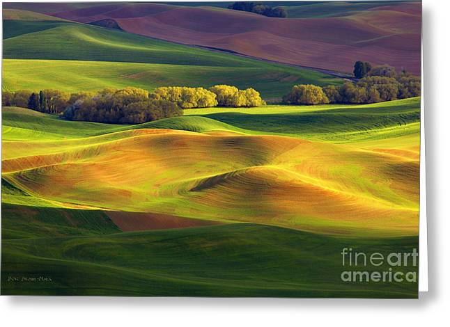 Light Play Greeting Card by Beve Brown-Clark Photography
