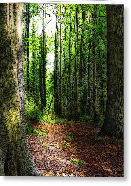 Conifer Tree Greeting Cards - Light Through The Trees Greeting Card by Meirion Matthias