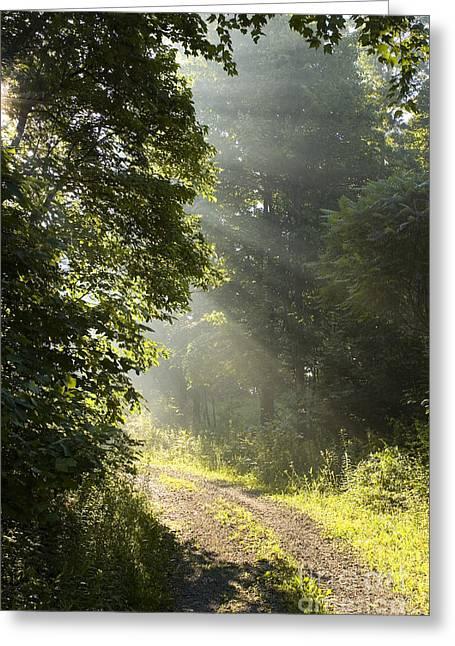 Gravel Road Greeting Cards - Light unto my Path Greeting Card by Thomas R Fletcher