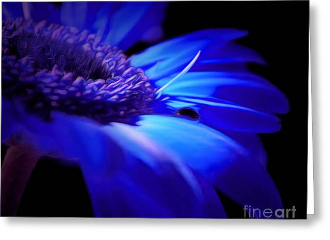 Light Within Me Greeting Card by Krissy Katsimbras