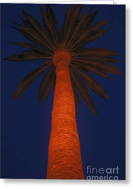 Beverly Greeting Cards - Lighted Palm Tree in Beverly Hills Greeting Card by Will & Deni McIntyre