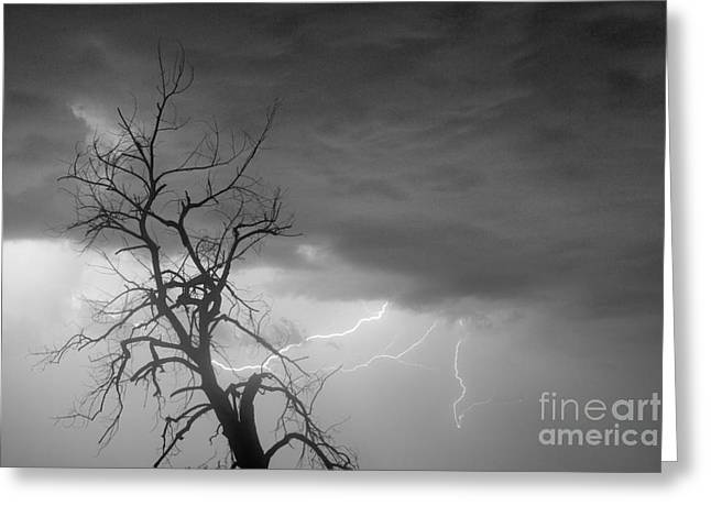 Lightning Strike Greeting Cards - Lightning Tree Silhouette 29 in Black and White Greeting Card by James BO  Insogna