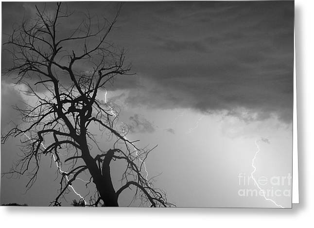 Lightning Strike Greeting Cards - Lightning Tree Silhouette 38 Black and White Greeting Card by James BO  Insogna