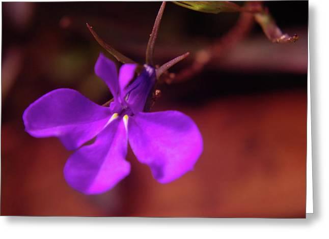 Like A Little Blue Star  Greeting Card by Jeff Swan