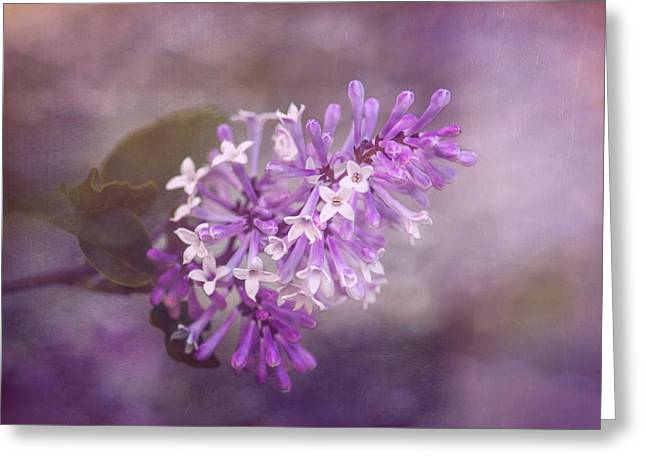 Lilac Blossom Greeting Card by Tom Mc Nemar