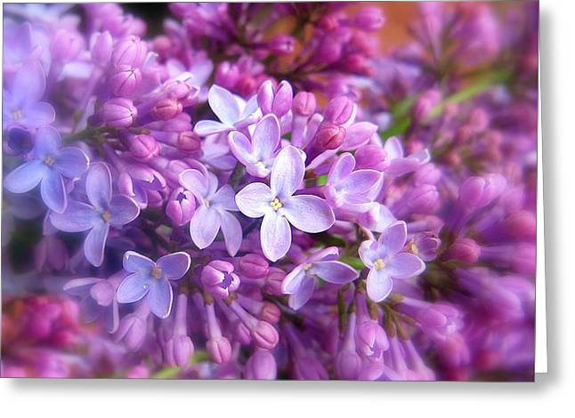 Seasonal Bloom Greeting Cards - Lilac Greeting Card by Jessica Jenney