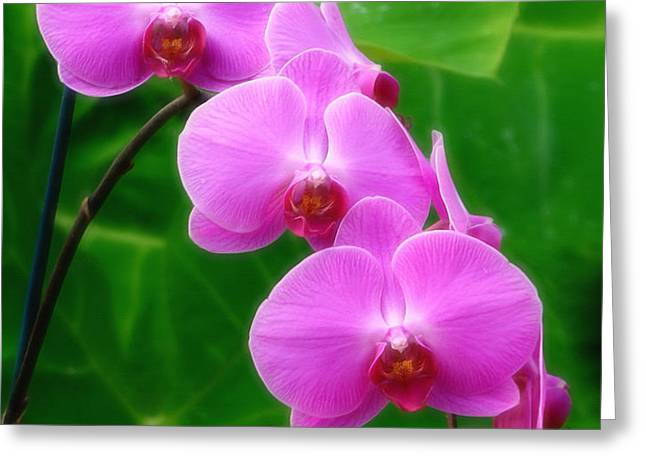 Lilac Orchid Beauties Greeting Card by Sue Melvin