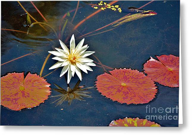 Water Garden Tapestries - Textiles Greeting Cards - Lilie pads Greeting Card by Edna Weber