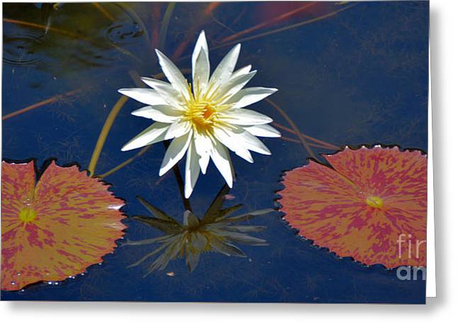 Water Garden Tapestries - Textiles Greeting Cards - Lilie White Greeting Card by Edna Weber