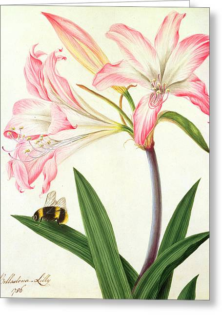 Lilium Belladonna And Bee Greeting Card by Matilda Conyers