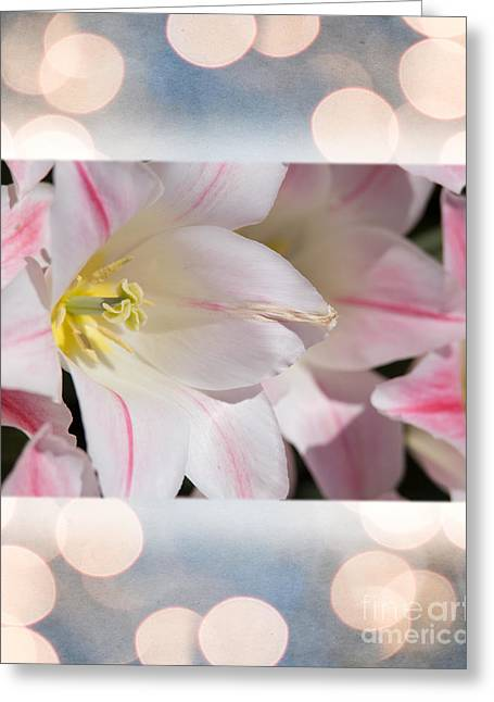 March Greeting Cards - Lilly for Charity Greeting Card by Tom Gari Gallery-Three-Photography