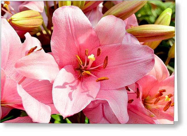 Day Lilly Greeting Cards - Lilly Greeting Card by Lisa Richards