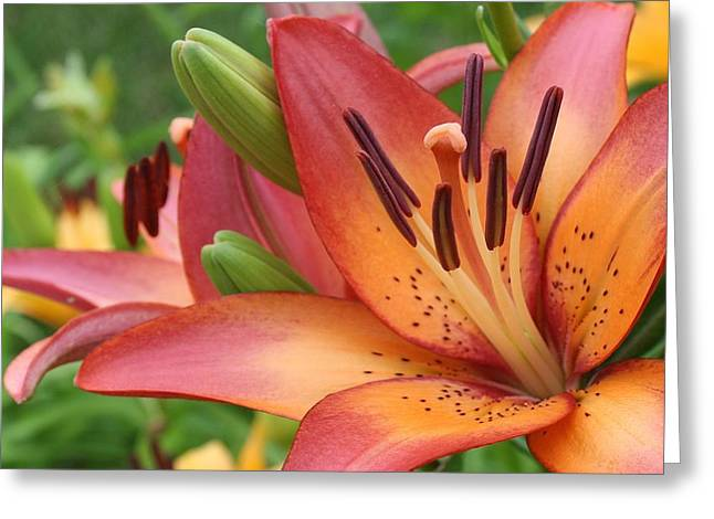 Greenbay Greeting Cards - Lilly of a Different Color Greeting Card by Bruce Bley
