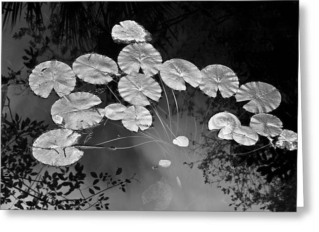 Lilly Pads Greeting Cards - Lilly Pads Fakahtchee Strand Greeting Card by Jim Dohms