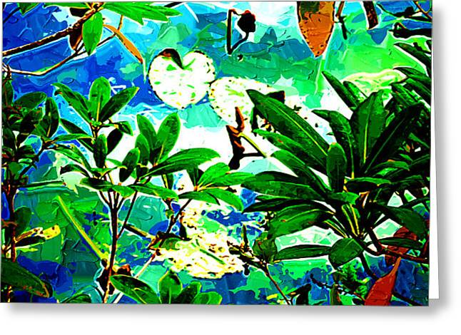 Lilly Pods Greeting Card by Dale Stillman
