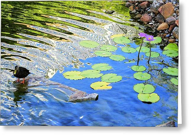 Lilly Pad Greeting Cards - Lilly Greeting Card by Ruby McCoy