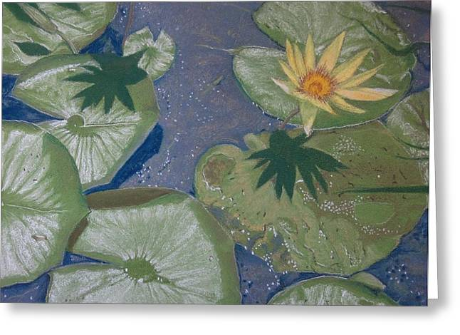 Water Lilly Pastels Greeting Cards - Lillys and Flowers at Farrington Lake Greeting Card by Harvey Rogosin