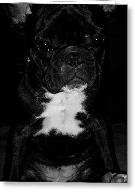Puppies Photographs Greeting Cards - Lilou Greeting Card by Tracy Bornkessel