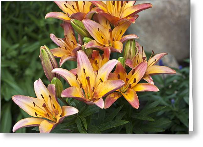 Interior Scene Greeting Cards - Lily Abundance Greeting Card by Sandra Foster