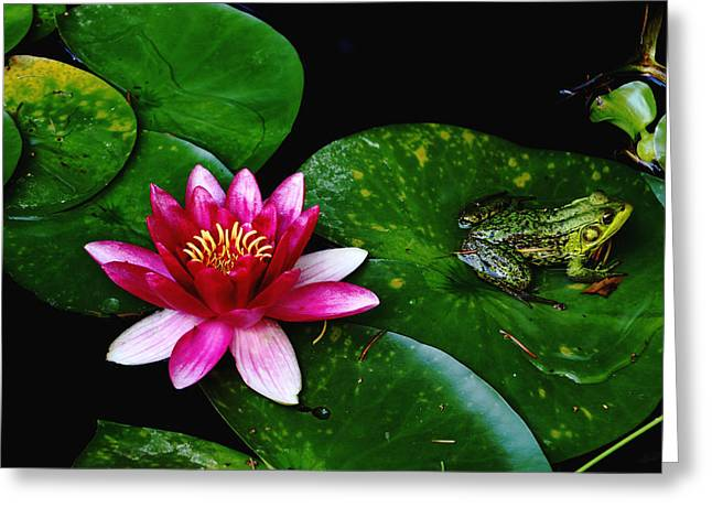 Lily And The Frog Greeting Card by Debbie Oppermann