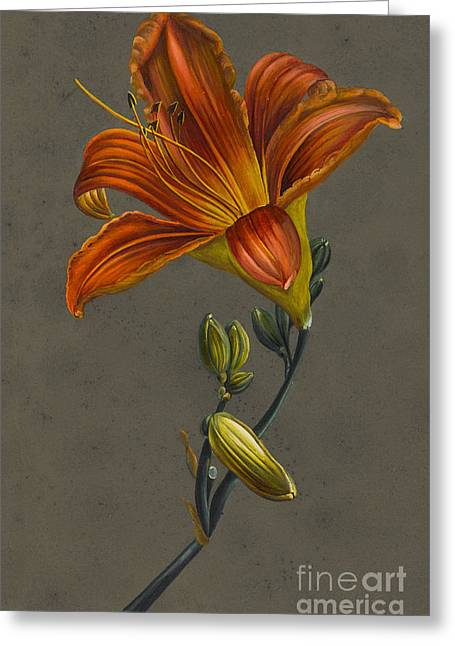 Louise Greeting Cards - Lily Greeting Card by Louise D
