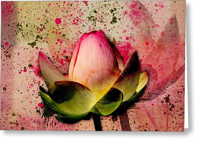 Lily My Lovely - S23asq Greeting Card by Variance Collections