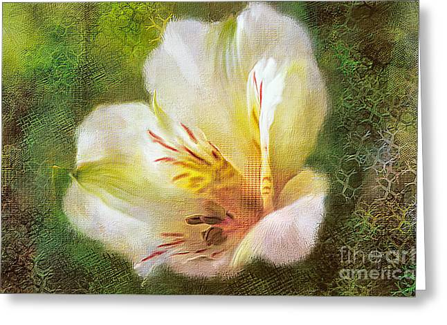 Lily Of The Incas Greeting Card by Lois Bryan