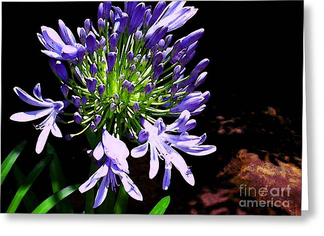 Nile Lily Greeting Cards - Lily of the Nile Greeting Card by James Temple
