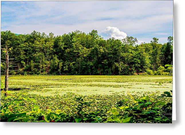 Alga Greeting Cards - Lily Pad Lake Clear blue skies Greeting Card by Joshua Zaring