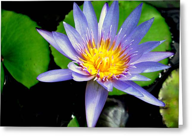 Flower Photos Tapestries - Textiles Greeting Cards - Lily Pad Greeting Card by Suzi Freeman