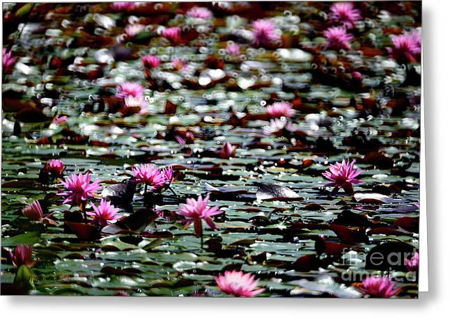 Lily Pads Greeting Card by Terry Elniski