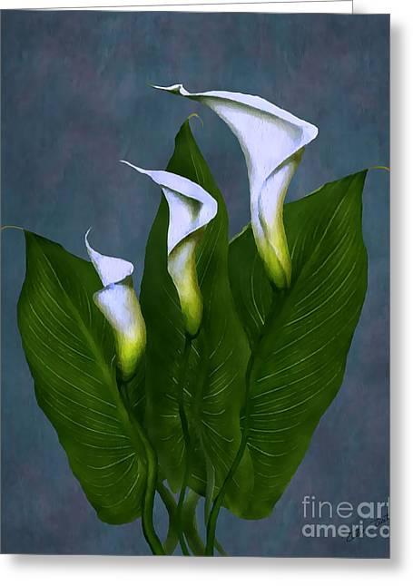 White Calla Lilies Greeting Card by Peter Piatt