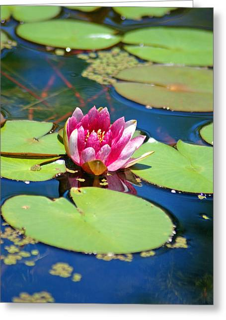 Water Garden Tapestries - Textiles Greeting Cards - Lily Pond Greeting Card by Donna Bentley