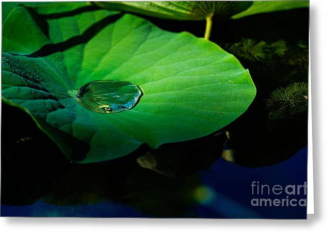Water Garden Tapestries - Textiles Greeting Cards - Lily Water Greeting Card by James Hennis