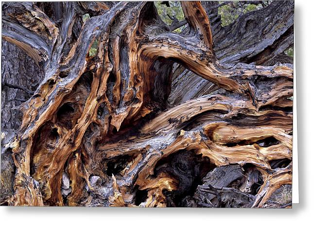 Tree Roots Greeting Cards - Limber Pine Roots Greeting Card by Leland D Howard