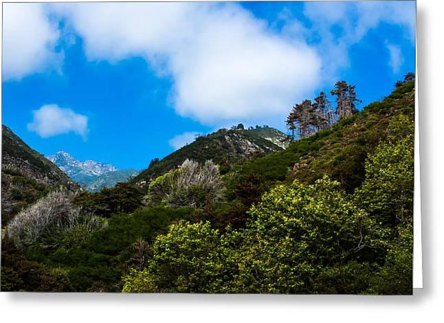 Big Sur Greeting Cards - Limekiln Canyon Limekiln State Park Greeting Card by Danny Goen