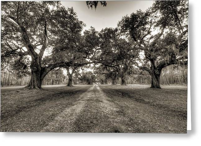 Plantation Greeting Cards - Limerick Plantation Live Oaks Greeting Card by Dustin K Ryan