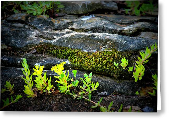 Nashville Tennessee Greeting Cards - Limey Moss and Rocks Greeting Card by Buffy Butler
