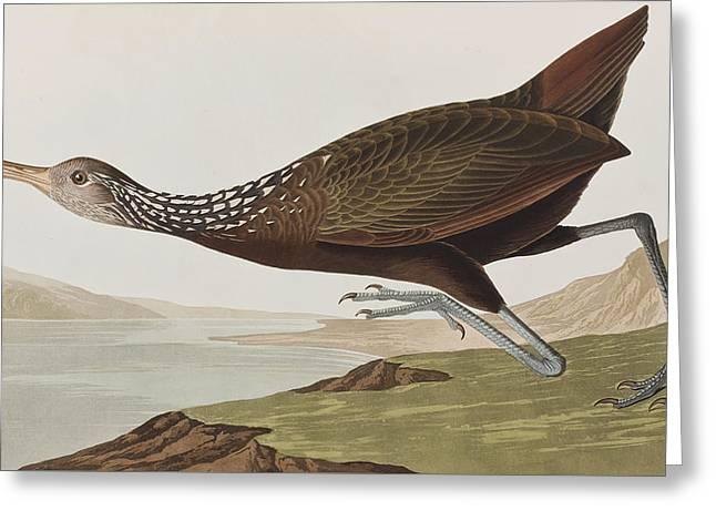 Courlan Greeting Cards - Limpkin Greeting Card by John James Audubon