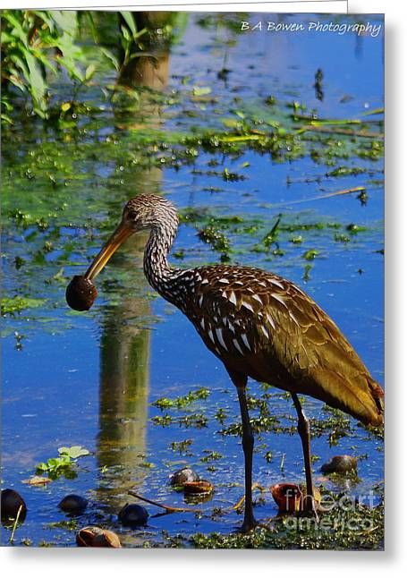 Polk County Florida Greeting Cards - Limpkin with an Apple Snail Greeting Card by Barbara Bowen