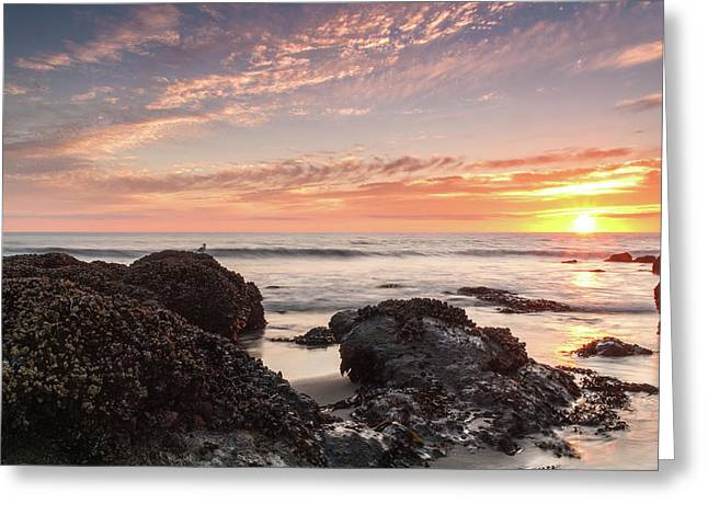 Lincoln City Beach Sunset - Oregon Coast Greeting Card by Brian Harig